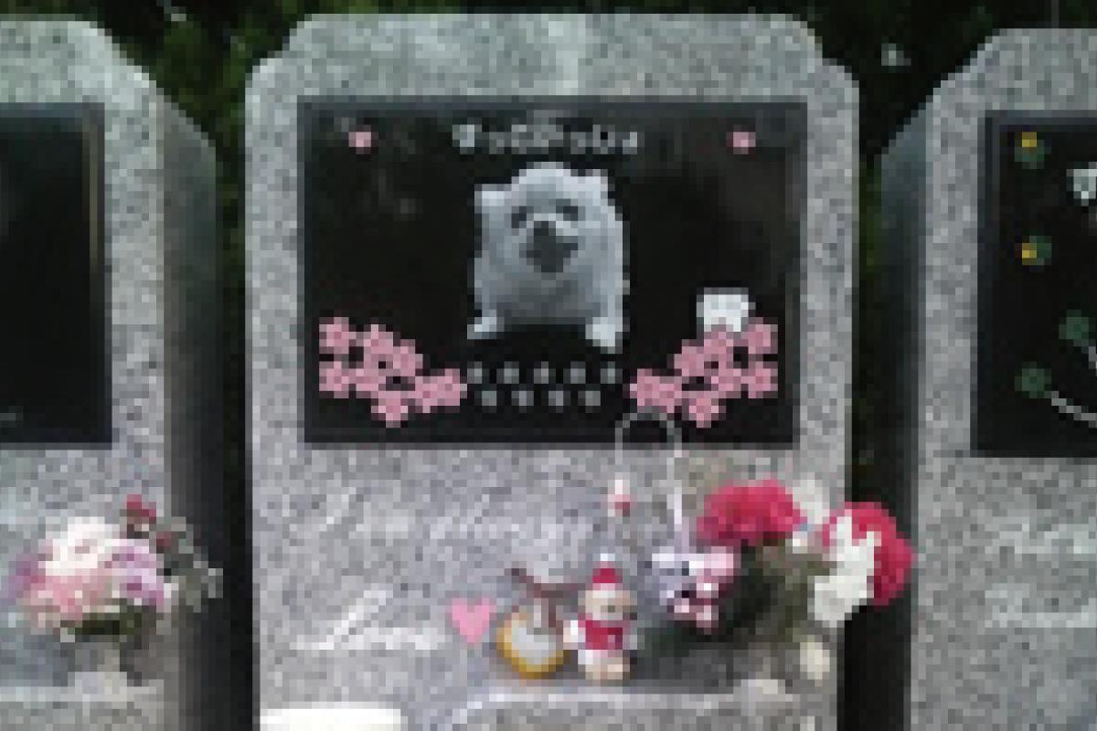 個別墓地C区画
